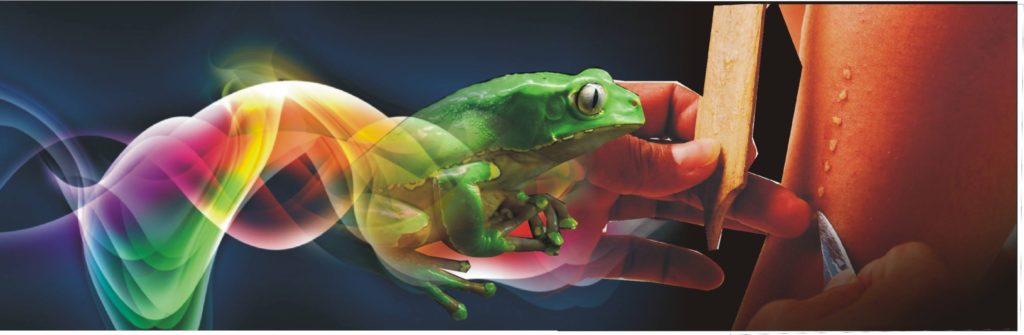 Kambo,Kambo, Kambo treatment, Kambo ceremony, kambo Houston, Kambo Texas, Plant medicine, Shamanic Healing, Shamanic Weekend retreat Sapo Bufo Frog Medicine